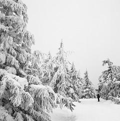 Wind Break (Aaron Bieleck) Tags: hasselblad500cm 120film analog 6x6 square film filmisnotdead hasselblad mediumformat wlvf blackandwhite snow winter snowshoeing outdoors timberline pnw pacificnorthwest oregon sarah 60mmct