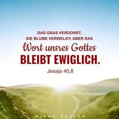 Jesaja 40,8 (bibel online) Tags: heiligergeist glauben retter daslamm gottliebt mich gnade biblestudy songsofpraise anbetung zeugnis weisheit anmut bibel evangelium predigen herr christus gott jesus
