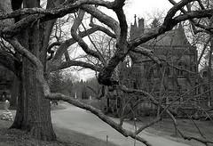 "Cincinnati - Spring Grove Cemetery & Arboretum ""Dexter Mausoleum - One With Nature"" (David Paul Ohmer) Tags: cincinnati ohio spring grove cemetery and arboretum dexter mausoleum foggy morning tree branches"
