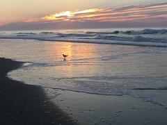 IMG_5124 (francesxcabrini) Tags: chincoteague assateague island ocean sea sunset beach