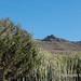 Gran Canaria landscape with euphorbia