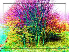 colored nature (j.p.yef) Tags: peterfey jpyef yef digitalart photomanipulation nature trees grass