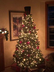 2018 YIP Day 359: Shipley tree (knoopie) Tags: 2018 december iphone picturemail shipley tree christmastree christmas 2018yip project365 365project 2018365 yiipday359 day359 gigharbor
