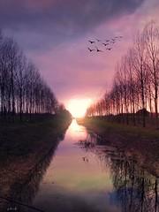 Heating up! (viktórianagynépetró1) Tags: sun sunset trees tree colorful cloudporn cloud clouds naturephoto naturelovers nature