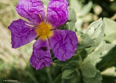 2688  Flores (Ricard Gabarrús) Tags: flores flors natura jardin botanica naturaleza ricardgabarrus planta olympus ricgaba