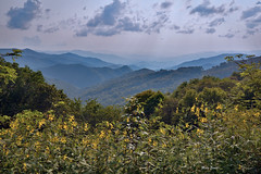 Yellow Flowers with a Mountain View (mevans4272) Tags: flowers mountains view trees georgia north clouds sky