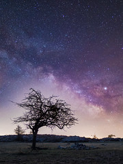 Voie lactée hivernale - Plateau de Cavillore, Caussols (jeff_006) Tags: landscape night sky milky way milkyway stars star tree winter nightscape south france frenchriviera mountain bivouac camp m43 micro43 u43 olympus em1mkii omd panasonic leica 12mm f14 panaleica vertical wideangle longexposure