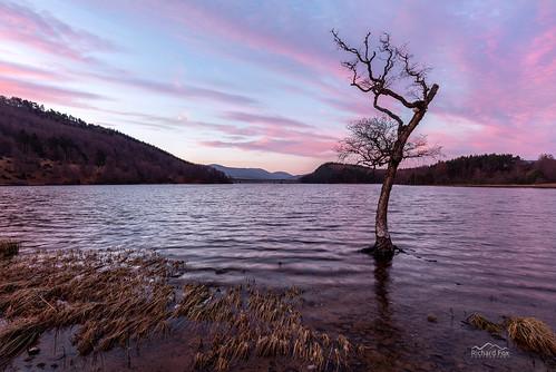 Crann èirigh na grèine | Loch Pityoulish | Scotland