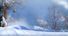 Lors d'une très courte éclaircie de 5 mn (Didier HEROUX) Tags: éclaircie neige snow hiver winter montagnes mountains 74 janvier 2019 raw panasonic leica alpes alps alpi alpen didierheroux heroux didier hautesavoie évasion rando randonnée paysage landscape froid arbre tree branche blanc extérieur outdoor auvergnerhonealpes annecy saison alpesdunord france french photography nature altitude inverno alpin scène europe flickr seasons allmountains frost