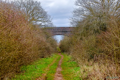 Marton Disused Railway 18th March 2019 (boddle (Steve Hart)) Tags: stevestevenhartcoventryunitedkingdomcanon5d4 marton disused railway 18th march 2019 steve hart boddle steven bruce wyke road wyken coventry united kingdon england great britain wild wilds wildlife life nature natural bird birds flowers flower fungii fungus insect insects spiders butterfly moth butterflies moths creepy crawley winter spring summer autumn seasons sunset weather sun sky cloud clouds panoramic landscape rugby unitedkingdom gb canon 5d mk4 100400mm is usm ii