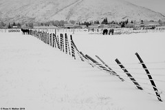 Almost Snowed In (walkerross42) Tags: horses fence snow frost town pasture winter blackandwhite monochrome montpelier idaho bearlakevalley collapse
