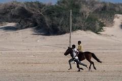 Horse Training (iamfisheye) Tags: 300mm nikon naturetrek d500 xqd february animal vr wildlife f4 modhvabeach india afs tc14iii horse 2019 pf raremammalsandbirdsofgujarat gujarat