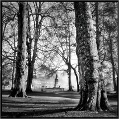 (J.Vergès Photography) Tags: rolleiflex planar trix film carlzeiss 80mm f28 rodinal tree monochrom bw annecy france