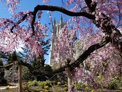 2019-03-31 14.53.52 (littlereview) Tags: dc littlereview 2019 nationalcathedral church flower garden spring blog