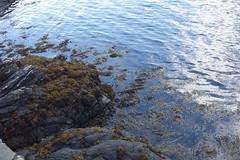 DSC01610 Eilean Donan, Scotland (Fernando Sa Rapita) Tags: scotland escocia eileandonan sony sonyrx100 sonydscrx100 water agua lake lago blue azul