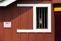 window (Jen MacNeill) Tags: stall stable barn horse show devon sign