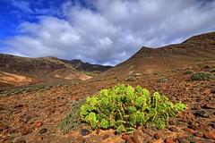 Cactus & hill (kalbasz) Tags: jadina national park fuerteventura spain xt2 xf1024 nature road cactus green hill mountain