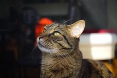 DSC03507 (iocatco) Tags: cat kitten cats sony a7