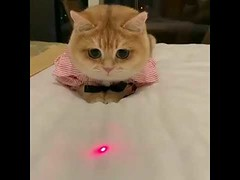 Cute cats with dressed (tipiboogor1984) Tags: aww cute cat funny dog youtube