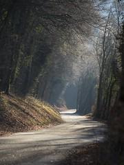 Route de campagne **---+°-°-° (Titole) Tags: road mist trees sunlight titole nicolefaton diamondaward 15challengeswinner challengegamewinner thechallengefactory challengeyouwinner