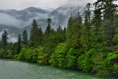 Metering a Forest and Low Clouds Moving Across a Mountainside (North Cascades National Park Service Complex)