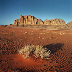 Wadi Rum desert, Jordan (Tomas Ruginis) Tags: jordan desert wadirum landscape nature wild wildnature sand ripple mountains film ektar 66 bronicasq mediumformat winter morning landscapephotography epson 600