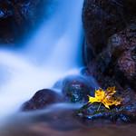 Flowing Autumn thumbnail