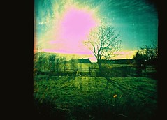 Tree through window, Penruddock, February 2016 (Mano Green) Tags: tree sun sky grass window glass light lake district penruddock england uk february 2016 winter colour slide cross process agfa precisa 100 35mm film diana mini