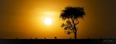 African Sunset #3 (momathew) Tags: sunset landscape masaimara safari settingsun silhouette coth5