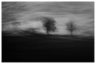 ICM trees , On the road