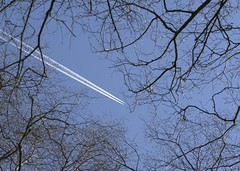 Up+Away (Tony Tooth) Tags: nikon d7100 sigma 70mm plane aeroplane jet jetliner contrail sky branches abstract rushtonspencer staffs staffordshire