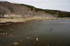 20190320a73_6265 (Gansan00) Tags: lce7m3 α7ⅲ sony japan 大分県 oita 日本 beepu 別府 landscape snaps ブラリ旅 03月 fe24105f4