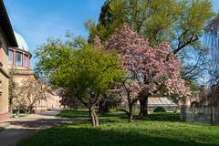 Ein schöner Garten (KaAuenwasser) Tags: botanischergartenkarlsruhe botanischergarten baum bäume kunsthalle orangerie pflanzen blüten magnolie ahorn wiese rasen weg wege park garten anlage ort stelle platz april 2019 torhaus tor gebäude historisch gewächshaus häuser