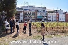 Inauguració del Centre d'Interpretació de la Malvasia - CIM, Sitges 2019 (Sitges - Visit Sitges) Tags: cim centre dinterpretació de la malvasia sitges 2019 visitsitges corral vila visites guiades fundacio hospital sant joan