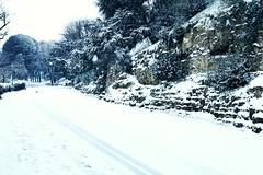 Viale Giuseppe Poggi (Go Ciop Go) Tags: firenze florence toscana tuscany italia italy neve snow nevicata snowfall inverno winter 2018 paesaggioinnevato snowylandscape