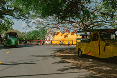 Yellows & Greens (lorenzoviolone) Tags: finepix fujix100s fujifilm fujifilmx100s x100s mirrorless travel:southeastasia=2017 phranakhonsiayutthaya changwatphranakhonsiayuttha thailand changwatphranakhonsiayutthaya th