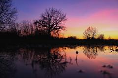 Shadow (Péter Vida) Tags: shadow wasser wood sky photo tükörkép víz fa ég tree sunset water lake grass river dusk landscape serene