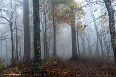 Moments in time... (jaegemt1) Tags: fog forest foggy fallfoliage landscape light nature nikon d810 mariajaegerphotography magic jaegemt1 path trees tranquil