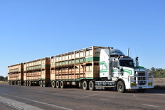 Curley Cattle Transport #32 - Kenworth T659 (Scottyb28) Tags: kenworth t659 truck trucks trucking highway haulage roadtrain loaded stockcrate