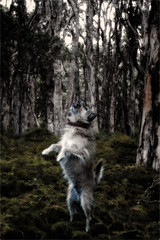 Just Barking At Birds (Peter Polder) Tags: australia dog exterior field forest gardens landscape park sydney trees urban