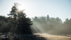 Morning Glory (Light II) (judithrouge) Tags: mist misty nebel neblig morgens morninglight morningmood morning morgennebel morgenstimmung raysoflight lightbeam light lichtstrahl lichtstimmung licht dezember december augsburg germany deutschland trees bäume sun sonne gegenlicht contrejour