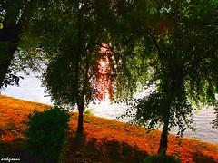 le rive del fiume (archgionni) Tags: fiume river po acqua water alberi trees rami branches foglie leaves sole sun riflessi reflections