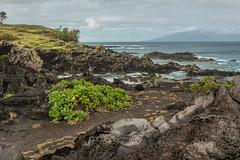 God's Garden (Austin Westervelt) Tags: hawaii maui island lava rocks rocky water ocean sea waves landscape seascape outdoors outside beautiful sky clouds coast shore coastline green blue
