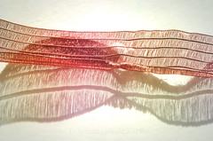 Cloth for Macro Mondays (pics by paula) Tags: cloth ribbon shadow delicate macro monday mondays macromondays macromonday abstract picsbypaula red pink white colour colours