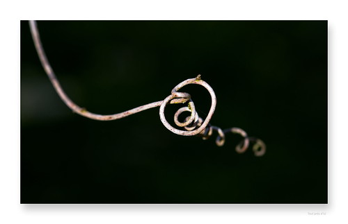 "tatoué dans nos pensées • <a style=""font-size:0.8em;"" href=""http://www.flickr.com/photos/88042144@N05/33151641928/"" target=""_blank"">View on Flickr</a>"