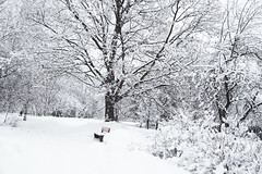 Winter is back (Tashata) Tags: nature winter white beautiful black tree snow park bench oak outdoor outdoors composition sony sonyrx10iv carlzeiss zeissvariosonnart cold frost landscape