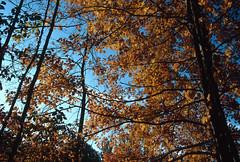 Eagle Creek Park, Indianapolis, Indiana (Roger Gerbig) Tags: fullframe 135film 35mm transparency slidefilm pkl kodachrome200 ef28105mmf3545 canoneos3 rogergerbig autumn fallcolors lilylake indiana indianapolis eaglecreekpark