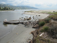 Malibu Lagoon, CA IMG_3411 (Hart Walter) Tags: malibulagoon legacypark royaltern brownpelican grayplover marbledgodwin