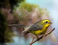Grassland Yellow-finch (maom_1 (Off, most of the time)) Tags: birds wildlife tree flower glicínia collage digital texture