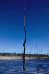 Bare Tree (Brian 104) Tags: tree winter swamp bare topaz digitalart